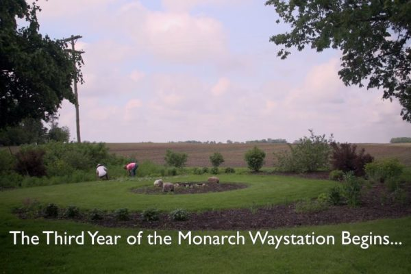 Year 3 - Mayfield Monarch Waystation